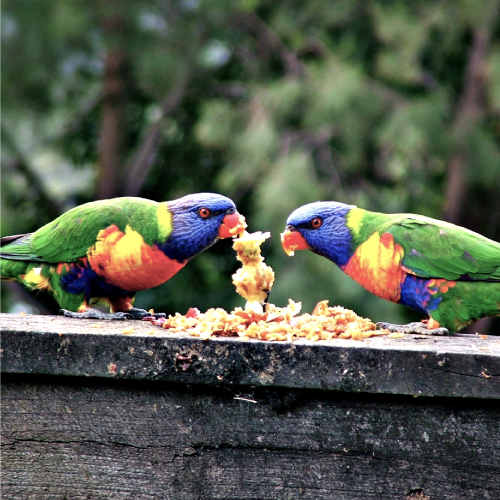 Local Coffs Harbour Removal business. Image of local birds